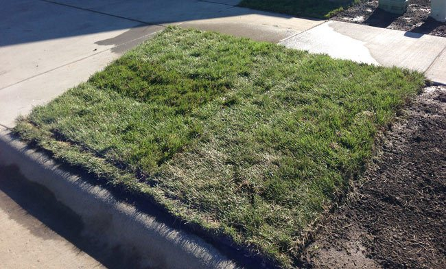 tips-for-installing-sod