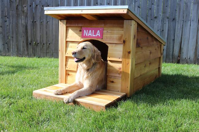 DIY Doghouse