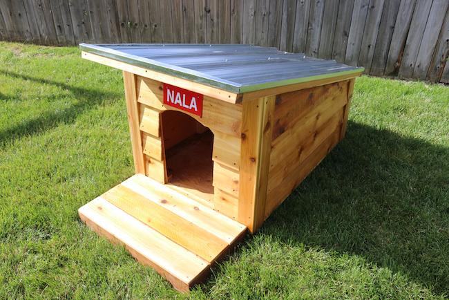 doghouse in yard